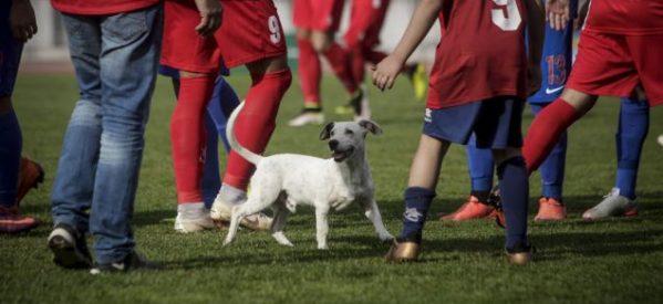 Ο ξεχωριστός «φίλαθλος» που εισέβαλε στο γήπεδο των Τρικάλων – Ήθελε χάδια και παιχνίδι