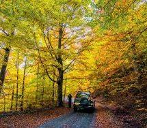 Μανιταροβόλτες για μικρούς και μεγάλους και απρόσμενες διαδρομές στα φθινοπωρινά τοπία της Βάλια Κάλντα.