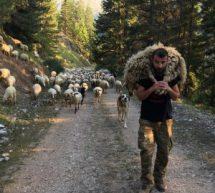 Στις βουνοκορφές του Ασπροποτάμου , ένας ωραίος τύπος που έχει σπουδάσει marketing ζει με τη γυναίκα του εκτρέφοντας πρόβατα