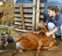 Τρίκαλα – Οι 3 αδερφές τέταρτης γενιάς κτηνοτρόφοι από το Ελληνόκαστρο
