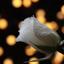 Έφυγε από τη ζωή η Ευανθία Θάνου – Λυγάτσικα