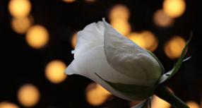 Την Κυριακή η κηδεία 32χρονης Κωνσταντίνας Σούρλα