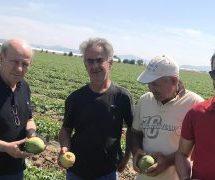 Χρήστος Σιμορέλης σε  αυτοψία σε καλλιεργούμενες εκτάσεις που υπέστησαν ζημιές από τη χαλαζόπτωση