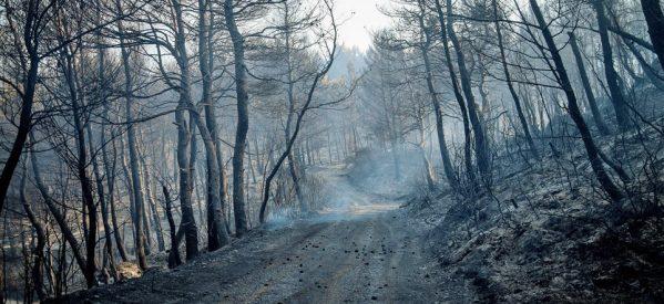 Εύβοια: Στάχτη 25.000 στρέμματα δάσους – Τεράστια η οικολογική καταστροφή