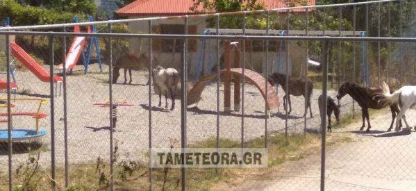 Χρυσομηλιά Καλαμπάκας: Άλογα στην παιδική χαρά του χωριού των πολυτέκνων