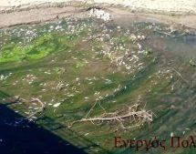 Νέα οικολογική καταστροφή στον Πηνειό ποταμό με χιλιάδες νεκρά ψάρια