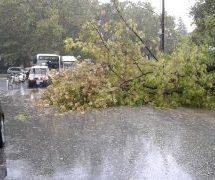 Συναγερμός στα Τρίκαλα : Έπεσε δέντρο στην Πλατεία , από τύχη δεν θρηνήσαμε θύματα