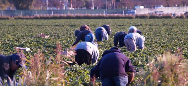 ΣΥΡΙΖΑ: Παρακρατούν και τον αγροτικό ΦΠΑ!