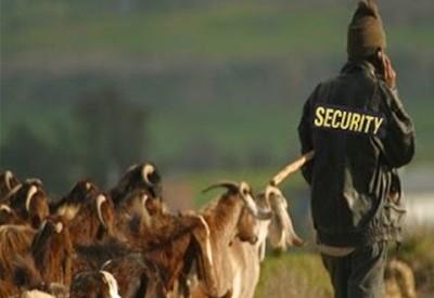 Σεκιουριτάδες… στα πρόβατα για τους κλέφτες!