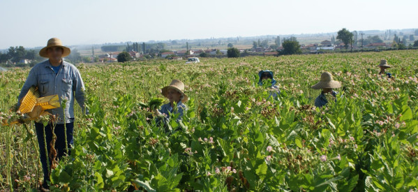 616.000 ευρώ σε 152 τρικαλινούς παραγωγούς βιολογικής γεωργίας