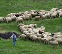 ΣΥΡΙΖΑ: Σήμερα η δημόσια διαβούλευση για την κτηνοτροφία