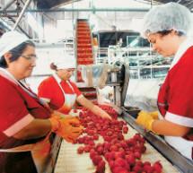 Νέα πρόσκληση για Μεταποίηση και Εμπορία Γεωργικών Προϊόντων