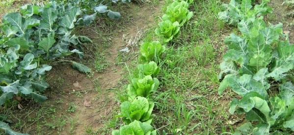 Τέλος στο κόλπο καταπάτησης δημοσίων εκτάσεων μέσω καλλιέργειας