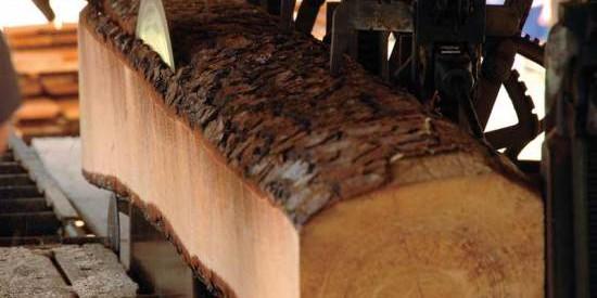 Παρέμβαση Δριτσέλη για τη βιομηχανία ξύλου Καλαμπάκας