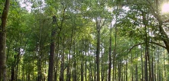 Αποχαρακτήρισαν 55 εκατομμύρια στρέμματα δάσους!