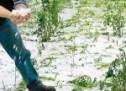 Ζημιές σε καλλιέργειες από χαλάζι και βροχή σε Ταξιάρχες – Φανερωμένη και Πετρόπορο