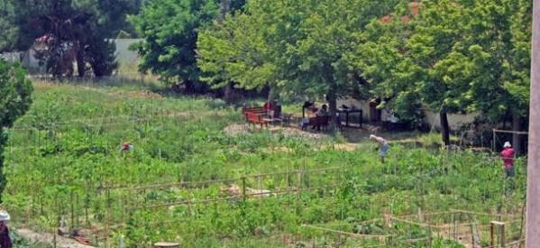 Γυρίζει μπούμερανγκ η καλλιέργεια δέντρων