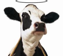 Καλαμπάκα: Ινδός φέρθηκε ανθρώπινα σε άρρωστη αγελάδα