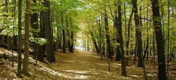 """Καταλύεται το """"άβατο"""" του δημοσίου δάσους"""