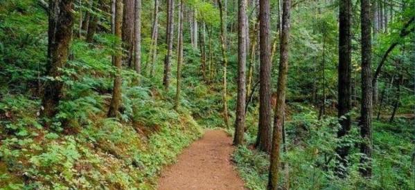 Επιστολή σε βουλευτές για το ν/σ για τα δάση