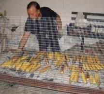 Γιορτή Καλαμποκιού στη Σαρακίνα