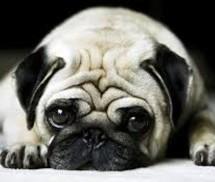Πρόστιμο 30.000 ευρώ σε 69χρονο που βασάνισε σκύλο