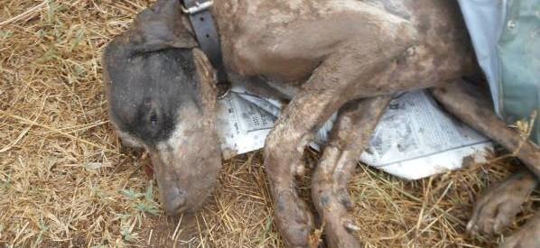 Κι άλλη θανάτωση σκύλου στα Τρίκαλα – Εφαρμόζεται ο νόμος