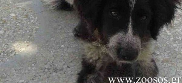 Πρόστιμο 30.000 ευρώ στον δολοφόνο της σκυλίτσας στα Νέα Στύρα