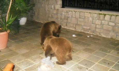 Μετσοβιτική βόλτα για τα αρκουδάκια
