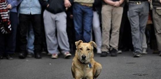 """""""Έφυγε"""" ο Λουκάνικος, ο πιο διάσημος επαναστάτης σκύλος"""