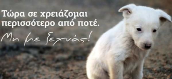 """Ο """"Αργος"""" για την Παγκόσμια Ημέρα των Ζώων"""
