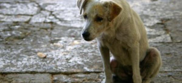 Βόλος: 38χρονος έδειρε 15χρονο επειδή το σκυλί του ούρησε στο πεζοδρόμιο!
