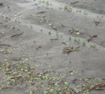 Τριάντα χιλιάδες στρέμματα καταστράφηκαν