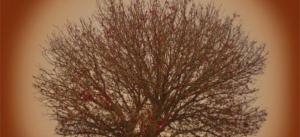 Νεκρός 76χρονος στην Μεσοχώρα που καταπλακώθηκε από δέντρο που έκοβε