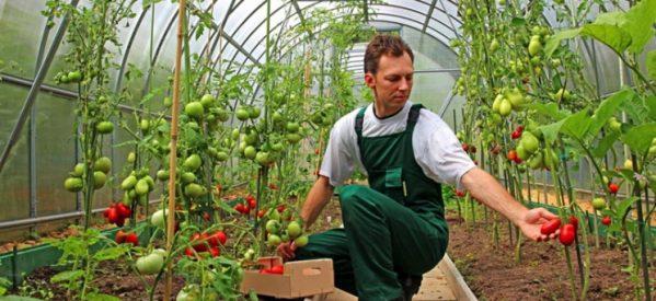 Επιδοτήσεις για βιολογική γεωργία, στα Τρίκαλα
