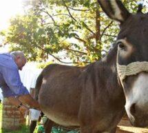 Φάρμα Μετσόβου.. Από γάλα γαϊδούρας μέχρι καλλυντικά!