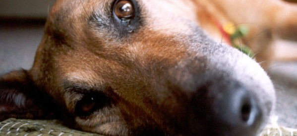 Ημερίδα για την κακοποίηση ζώων στα Τρίκαλα