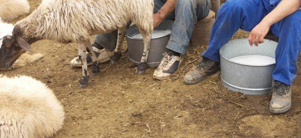 Η  κτηνοτροφία στον Ασπροπόταμο