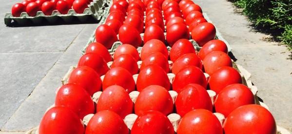 Οι Εθελοντές έβαψαν και πρόσφεραν αβγά