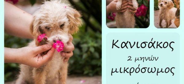 Σκυλάκια παραχωρούνται για υιοθεσία από Φιλοζωικό Σωματείο των Τρικάλων