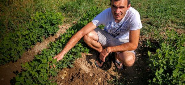 Φιστίκι… από τα Τρίκαλα: Όλο και περισσότεροι παραγωγοί στο νομό στρέφονται στην καλλιέργειά του