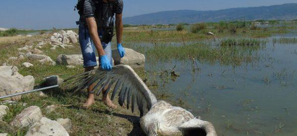 Εν αναμονή αποτελεσμάτων για τα νεκρά πουλιά της λίμνης Κάρλας