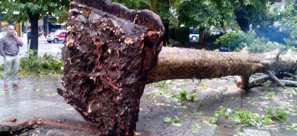 Tρίκαλα – Από το ξαφνικο μπουρίνι  ξεριζωθηκαν ολόκληρα δέντρα στην κεντρική πλατεία – απίστευτες εικόνες