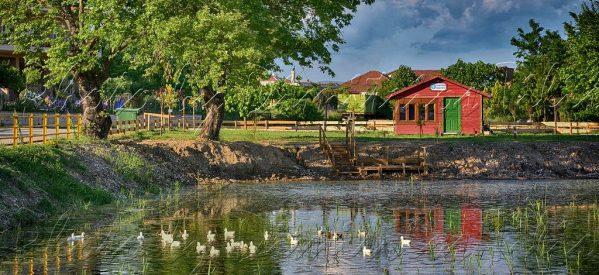 Σε νεκροταφείο πουλιών έχει μετατραπεί η λίμνη στο Μικρό Κεφαλόβρυσο