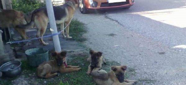 Εγκαταλείφθηκαν λυκόσκυλα στα Τρίκαλα