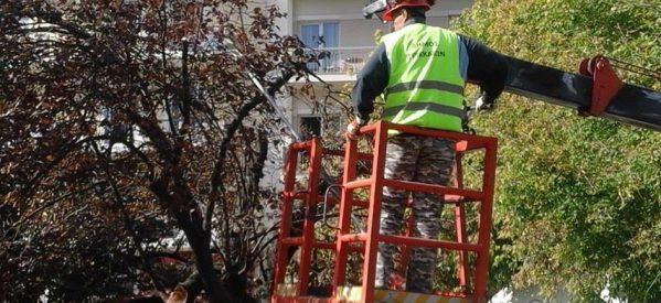 Καλλωπισμός και κλάδεμα δέντρων σε κεντρικά σημεία των Τρικάλων