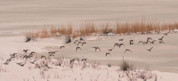 Η Λίμνη Κάρλα χρειάζεται σοβαρή προστασία και πολιτική ανάπτυξης
