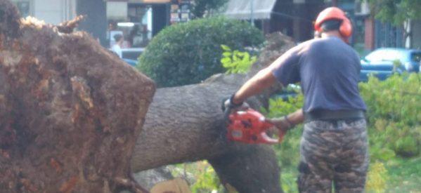 Πως σάπισαν τα δέντρα στην πλατεία και δεν τα πήραμε χαμπάρι ….
