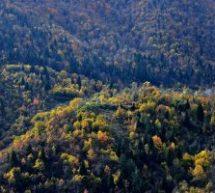 Για το δάσος Ελαφίου καλεί ο ΣΥΡΙΖΑ τους βουλευτές της ΝΔ να πάρουν θέση