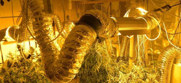 Εντοπίστηκε πλήρως εξοπλισμένο εργαστήριο υδροπονικής καλλιέργειας κάνναβης σε διαμέρισμα στη Λάρισα